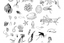 Biodiversity Illustrations